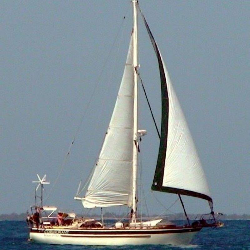 144 - Cormorant - featured