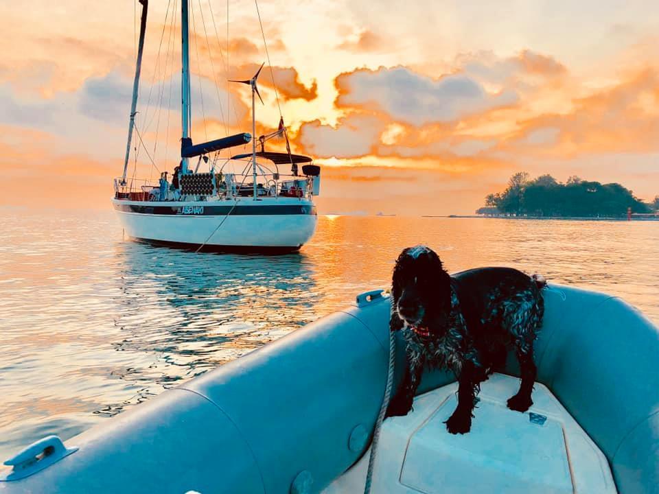 311 - Abenaki - dinghy dog