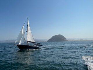 158 - Swell Dish - island